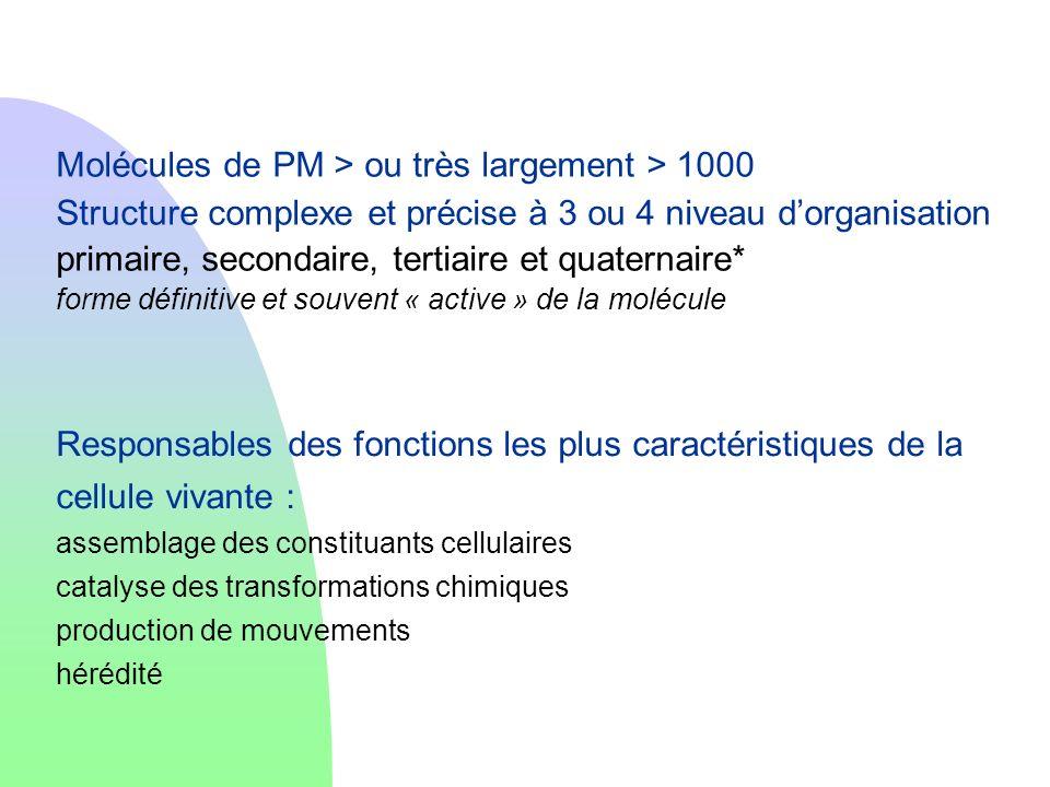 Molécules de PM > ou très largement > 1000 Structure complexe et précise à 3 ou 4 niveau dorganisation primaire, secondaire, tertiaire et quaternaire*