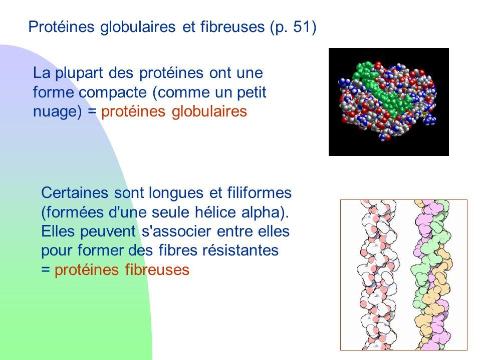Protéines globulaires et fibreuses (p. 51) La plupart des protéines ont une forme compacte (comme un petit nuage) = protéines globulaires Certaines so