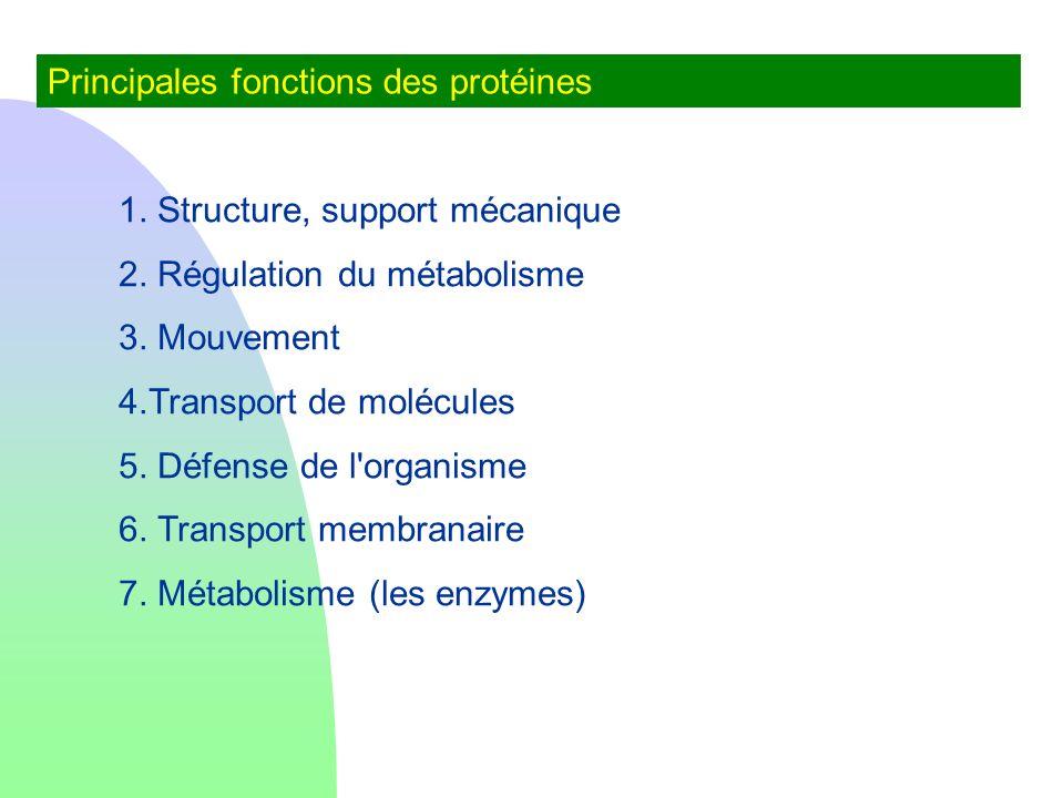 Principales fonctions des protéines 1. Structure, support mécanique 2. Régulation du métabolisme 3. Mouvement 4.Transport de molécules 5. Défense de l
