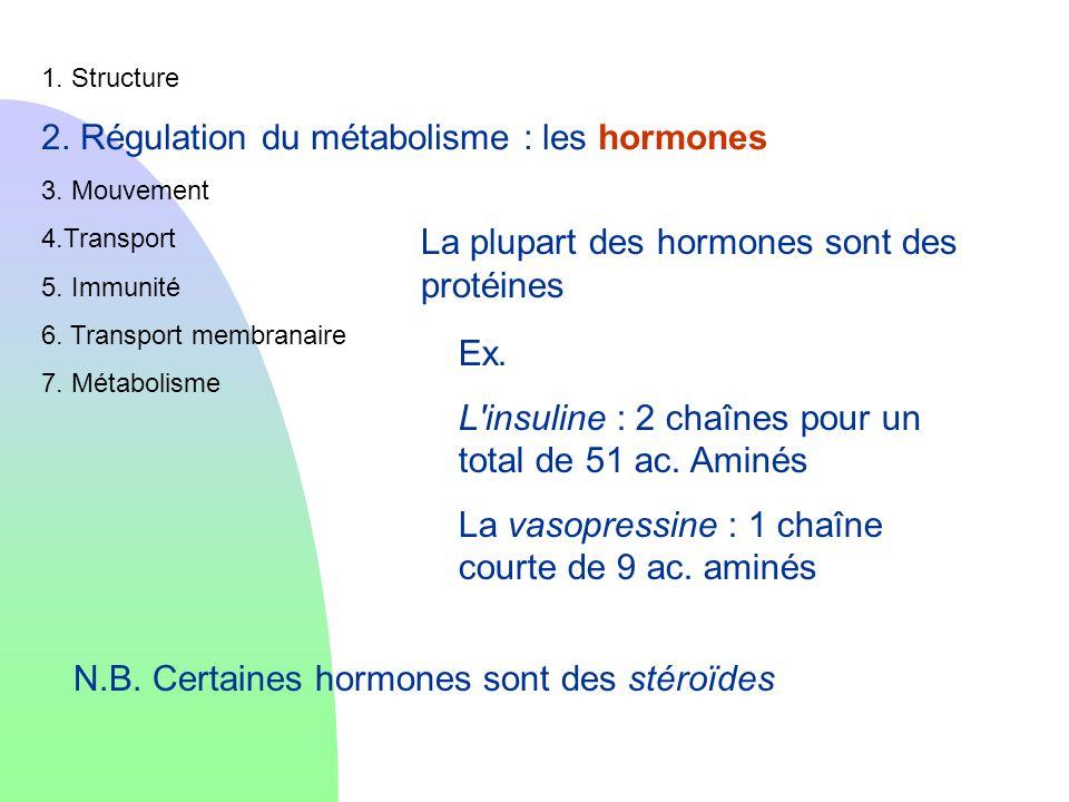 La plupart des hormones sont des protéines Ex. L'insuline : 2 chaînes pour un total de 51 ac. Aminés La vasopressine : 1 chaîne courte de 9 ac. aminés