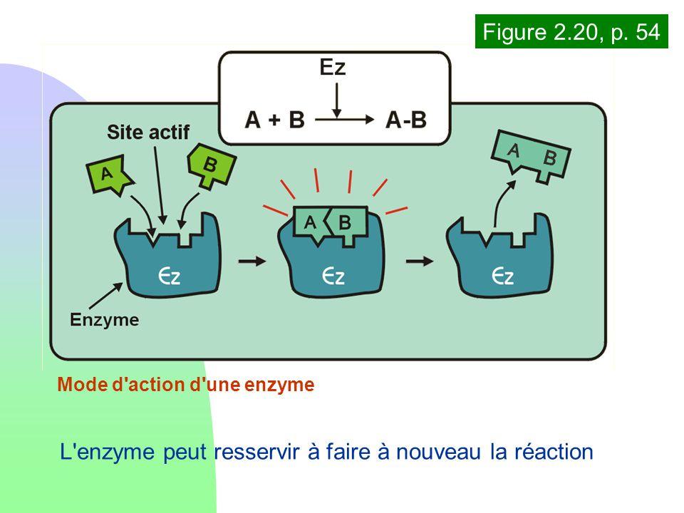 Mode d'action d'une enzyme L'enzyme peut resservir à faire à nouveau la réaction Figure 2.20, p. 54