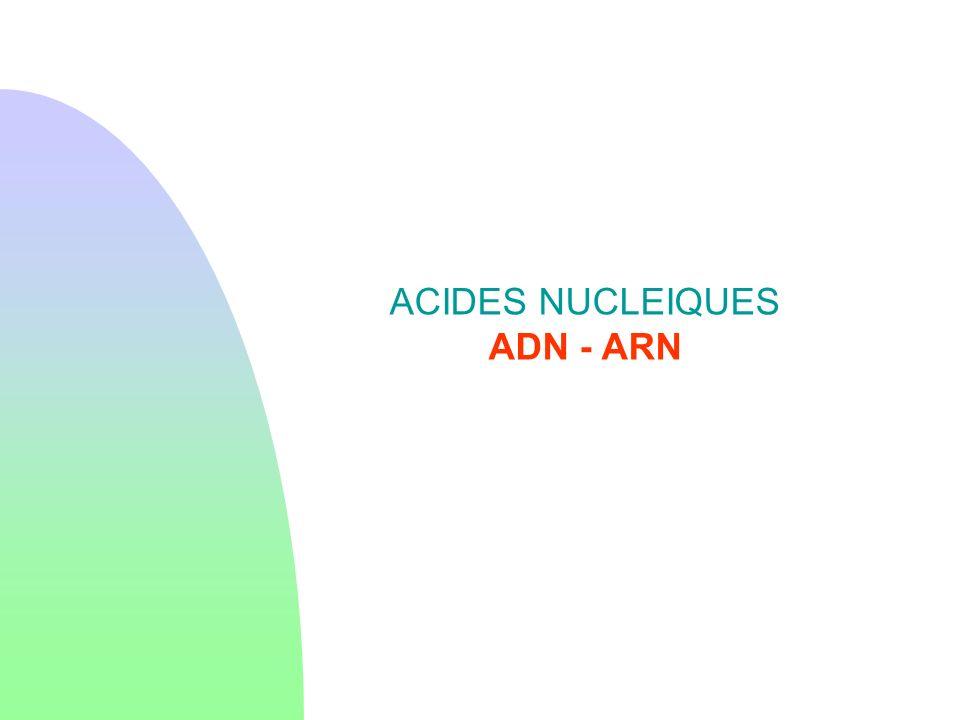 ACIDES NUCLEIQUES ADN - ARN