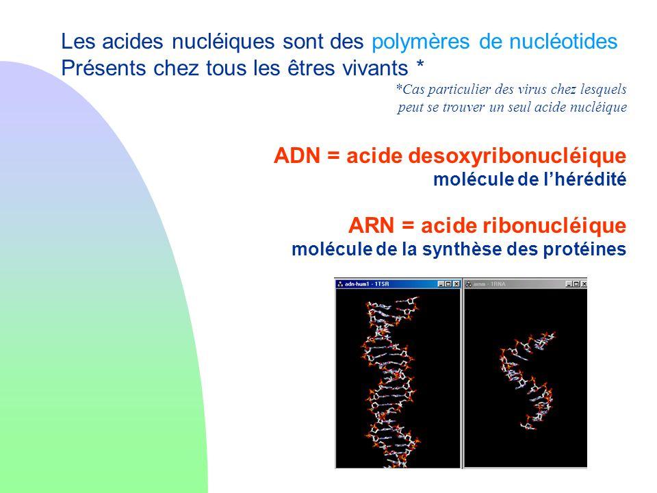 Les acides nucléiques sont des polymères de nucléotides Présents chez tous les êtres vivants * *Cas particulier des virus chez lesquels peut se trouve