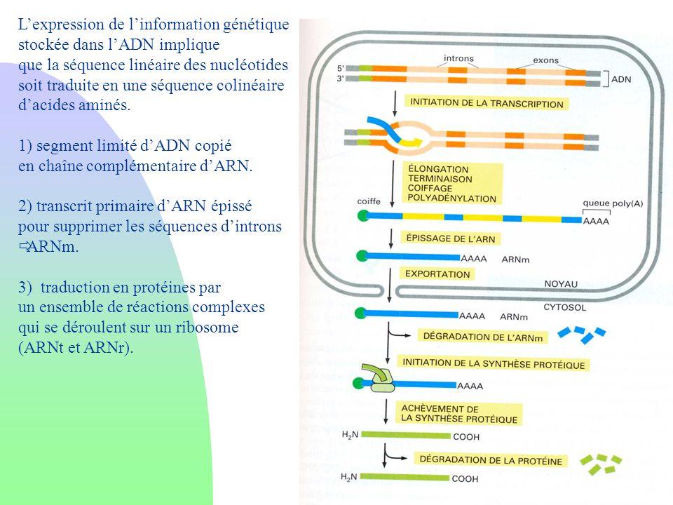 Lexpression de linformation génétique stockée dans lADN implique que la séquence linéaire des nucléotides soit traduite en une séquence colinéaire dac