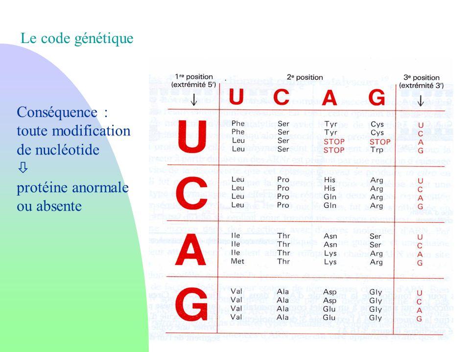 Le code génétique Conséquence : toute modification de nucléotide protéine anormale ou absente