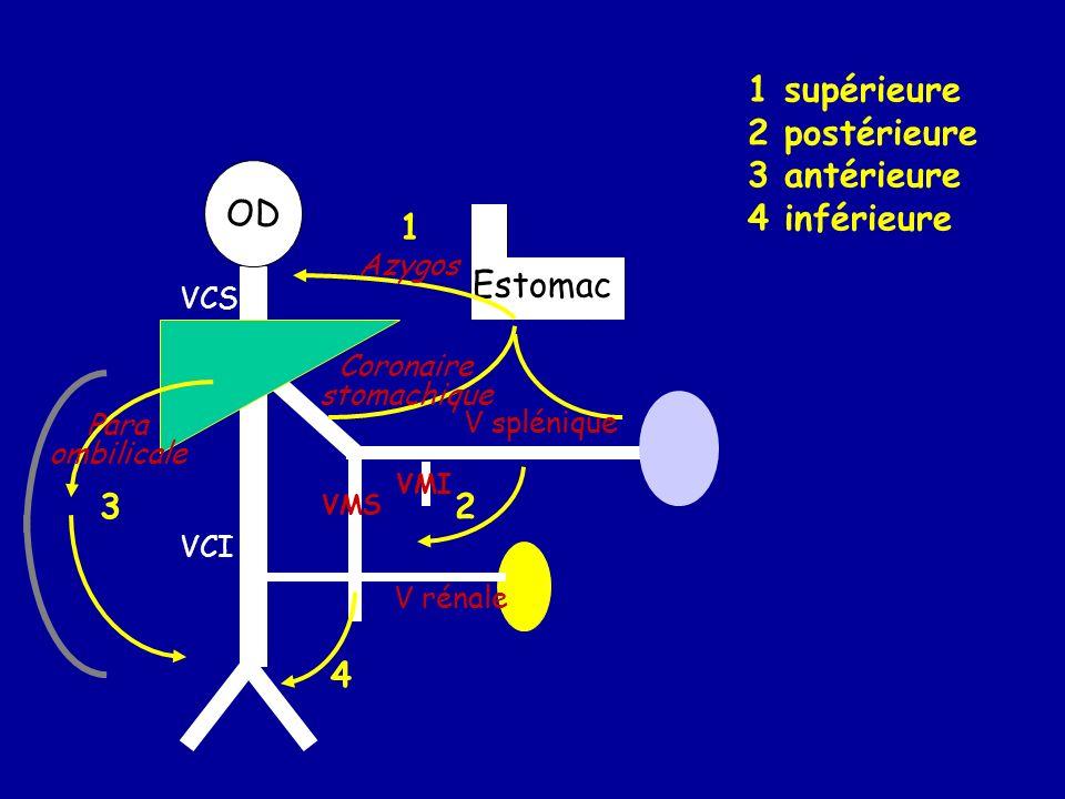 OD Estomac 1 23 4 V splénique VCI VCS V rénale VMS VMI 1 supérieure 2 postérieure 3 antérieure 4 inférieure Coronaire stomachique Azygos Para ombilicale
