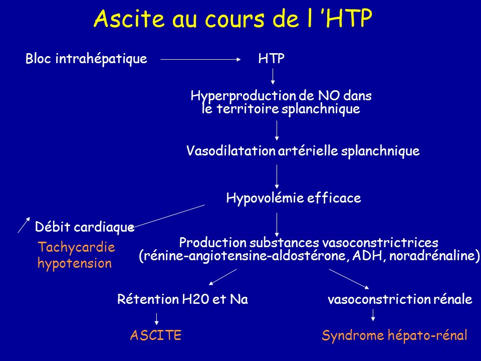 Ascite au cours de l HTP Bloc intrahépatiqueHTP Hyperproduction de NO dans le territoire splanchnique Vasodilatation artérielle splanchnique Hypovolém