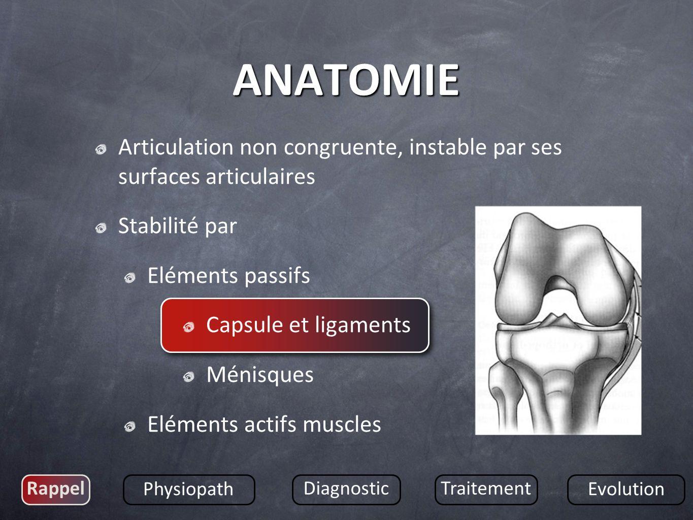 Articulation non congruente, instable par ses surfaces articulaires Stabilité par Eléments passifs Capsule et ligaments Ménisques Eléments actifs musc