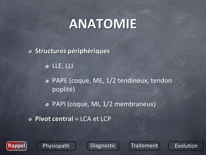 Structures périphériques LLE, LLI PAPE (coque, ME, 1/2 tendineux, tendon poplité) PAPI (coque, MI, 1/2 membraneux) Pivot central Pivot central = LCA e