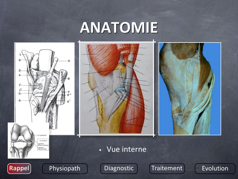 Vue interne Rappel Physiopath DiagnosticTraitement Evolution ANATOMIE