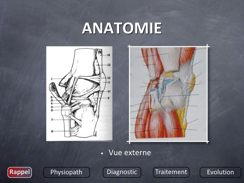 Vue externe Rappel Physiopath DiagnosticTraitement Evolution ANATOMIE