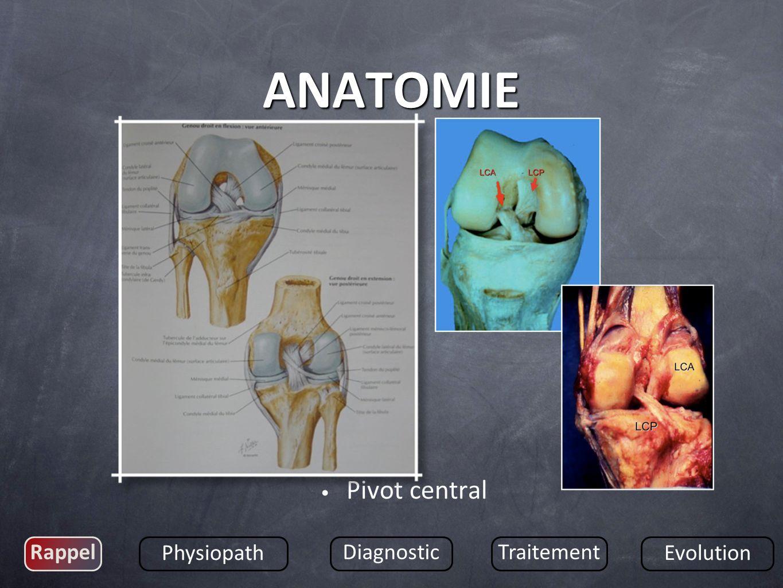 Pivot central Rappel Physiopath DiagnosticTraitement Evolution ANATOMIE