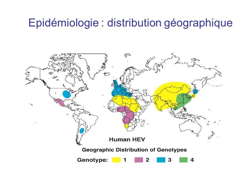 Résultats : évolution des paramètres virologiques Hépatite chronique : n = 16 –Tous virémiques > 6 mois –12 (75 %) toujours virémiques à 22 mois (7-96) –4 (25%) clairances virales à 14, 16, 22 et 23 mois : tous transplantés du foie –Sérologie anti-VHE IgG + au diagnostic : 4 patients (25%) IgG + à 6 mois 5 patients (31,25% de séroconversion) : pas dAc chez 43,75% des patients Au dernier suivi : 81,25% de séroconversion