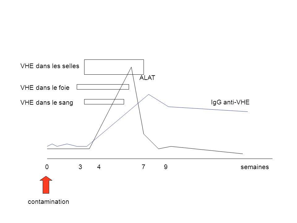 contamination semaines0 3 4 79 IgG anti-VHE ALAT VHE dans les selles VHE dans le foie VHE dans le sang
