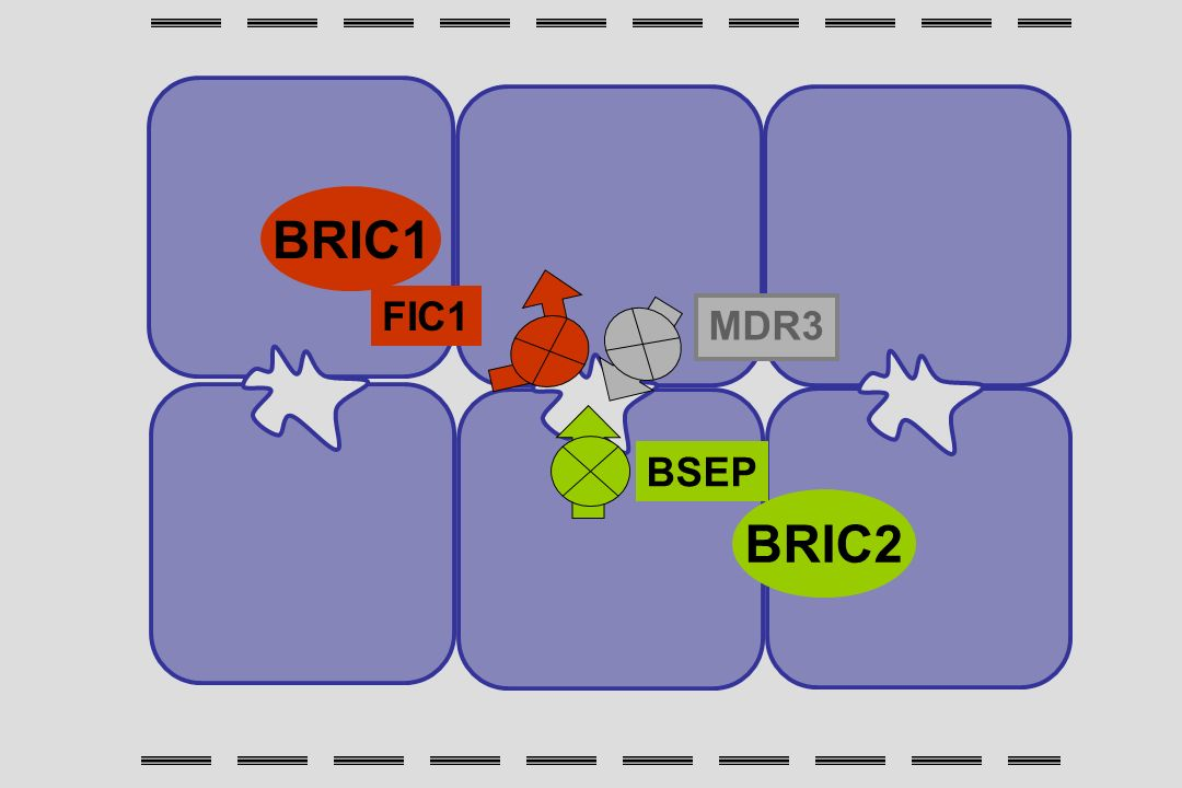 BSEP MDR3 FIC1 BRIC1 BRIC2