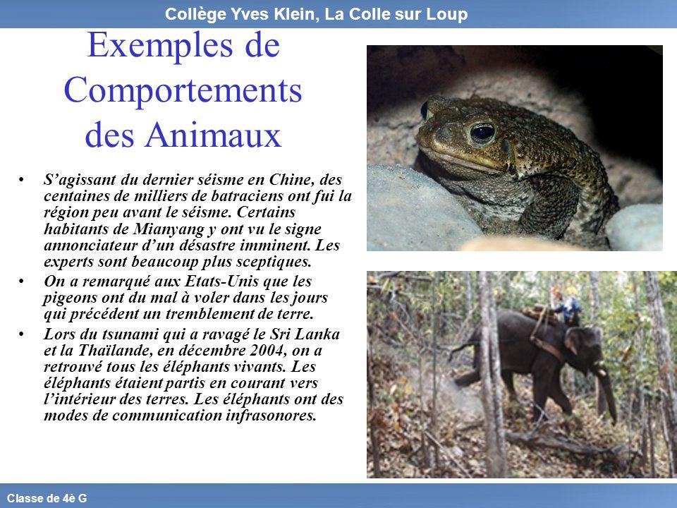 Collège Yves Klein, La Colle sur Loup Classe de 4è G Exemples de Comportements des Animaux Sagissant du dernier séisme en Chine, des centaines de mill