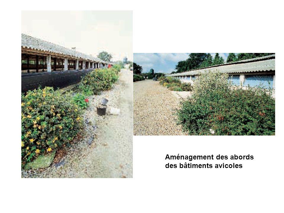 Aménagement des abords des bâtiments avicoles
