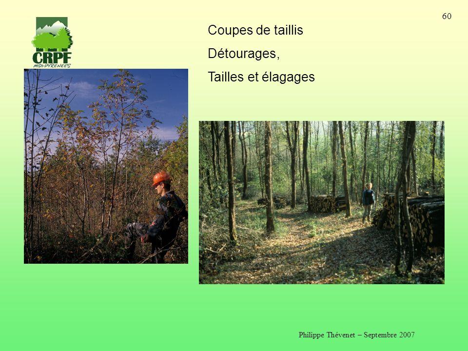 Philippe Thévenet – Septembre 2007 60 Coupes de taillis Détourages, Tailles et élagages