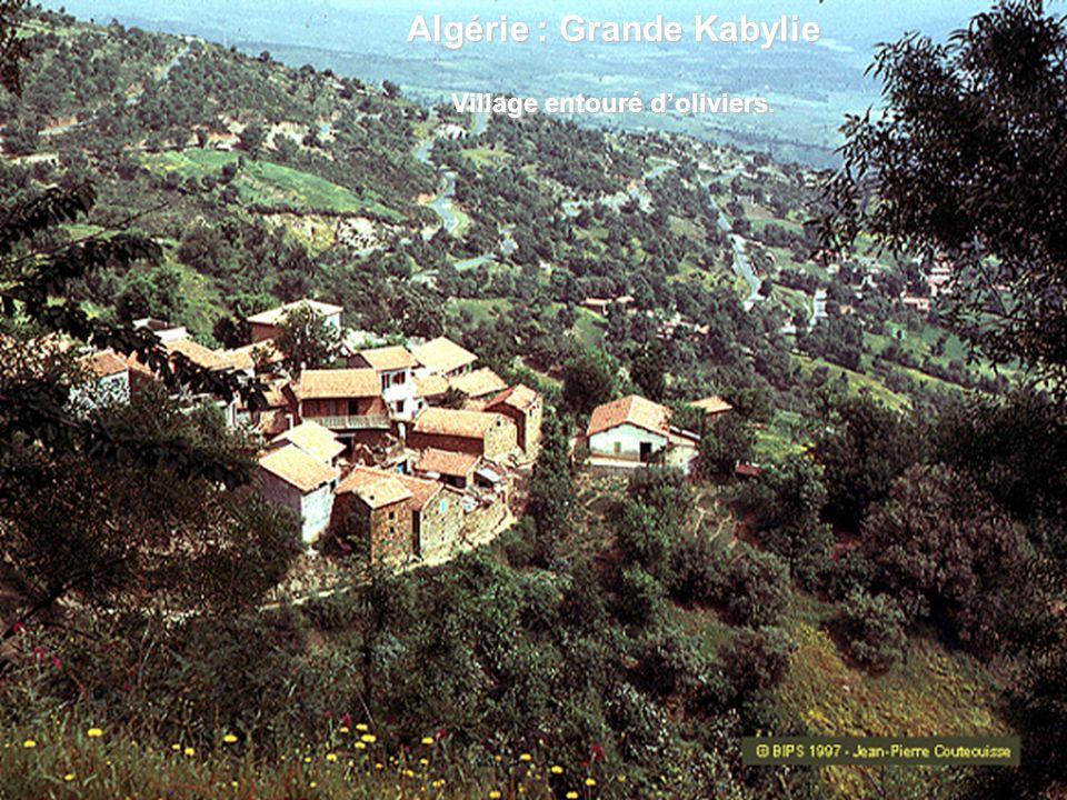 Algérie : Grande Kabylie Village entouré doliviers.