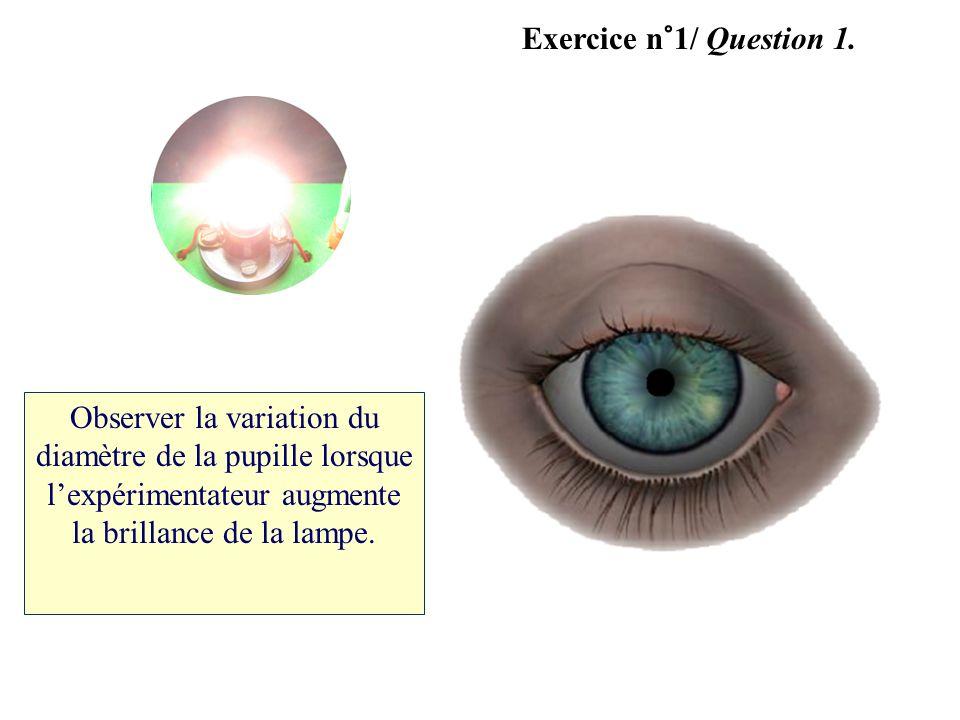 Observer la variation du diamètre de la pupille lorsque lexpérimentateur augmente la brillance de la lampe.
