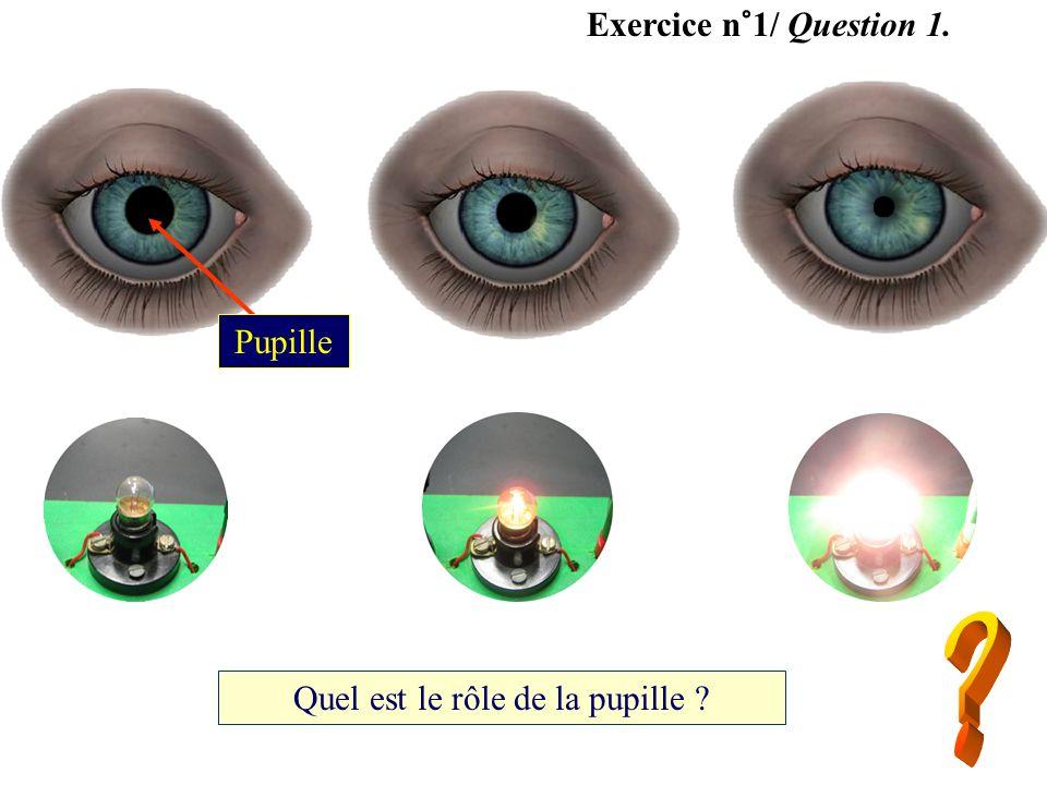 Exercice n°1/ Question 1. Quel est le rôle de la pupille ? Pupille