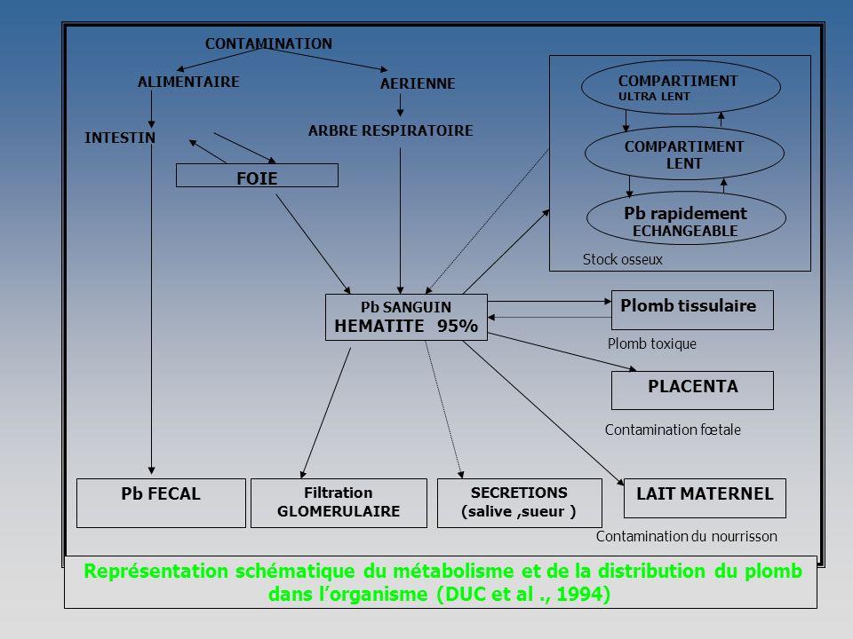 Plomb tissulaire Plomb toxique Pb rapidement ECHANGEABLE COMPARTIMENT LENT COMPARTIMENT ULTRA LENT Stock osseux Représentation schématique du métabolisme et de la distribution du plomb dans lorganisme (DUC et al., 1994) SECRETIONS (salive,sueur ) Filtration GLOMERULAIRE Pb FECAL PLACENTA LAIT MATERNEL Contamination du nourrisson Contamination fœtale AERIENNE ARBRE RESPIRATOIRE INTESTIN ALIMENTAIRE Pb SANGUIN HEMATITE 95% FOIE CONTAMINATION