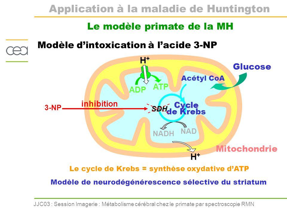 JJC03 : Session Imagerie : Métabolisme cérébral chez le primate par spectroscopie RMN Modèle dintoxication à lacide 3-NP Le modèle primate de la MH AD