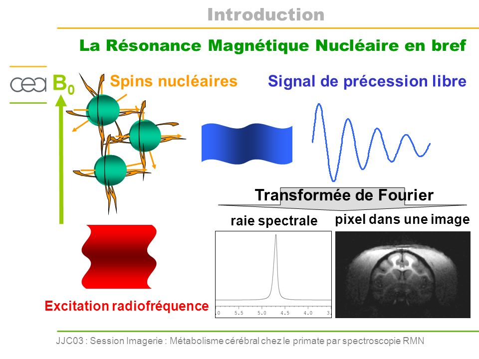 JJC03 : Session Imagerie : Métabolisme cérébral chez le primate par spectroscopie RMN Introduction Spins nucléaires B0B0 Excitation radiofréquence Sig