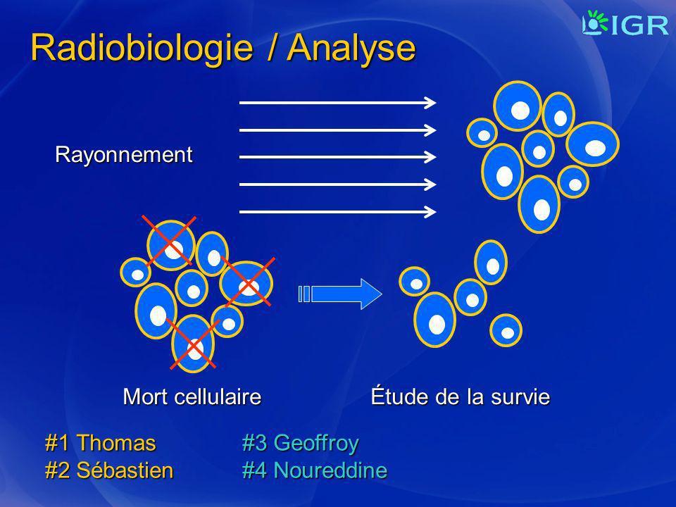 Radiobiologie / Analyse Rayonnement Mort cellulaire Étude de la survie #1 Thomas#3 Geoffroy #2 Sébastien#4 Noureddine