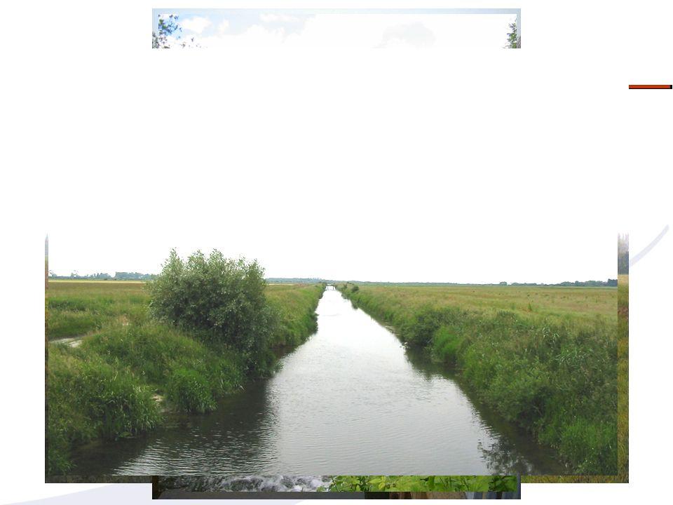 LA MORPHOLOGIE/ PARAMETRE ESSENTIEL DE LETAT GLOBAL DUN MILIEU Température lumière Abris Morphologie Habitats Facteurs de contrôle du fonctionnement écologique SUPPORT DEs FONCTIONNALITES BIOLOGIQUES: HABITATS/REPRODUCTION/NUTRITION…