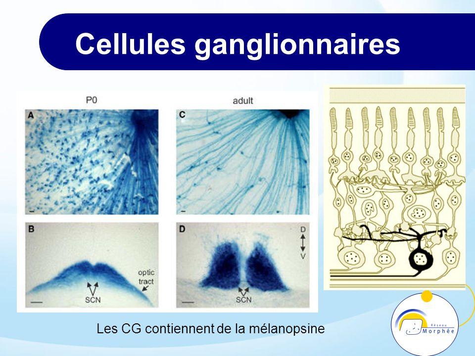 Cellules ganglionnaires Les CG contiennent de la mélanopsine
