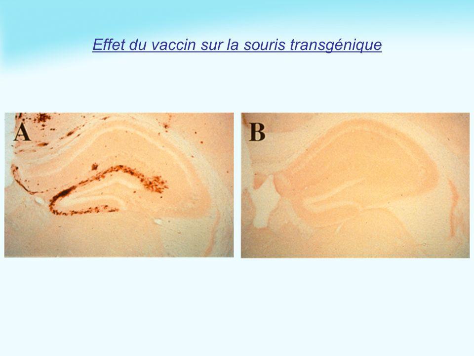 Effet du vaccin sur la souris transgénique