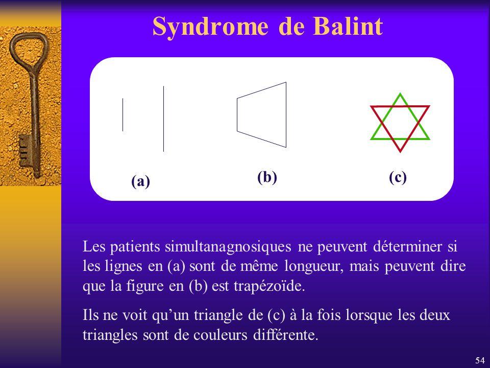 54 Syndrome de Balint (a) (b)(c) Les patients simultanagnosiques ne peuvent déterminer si les lignes en (a) sont de même longueur, mais peuvent dire q