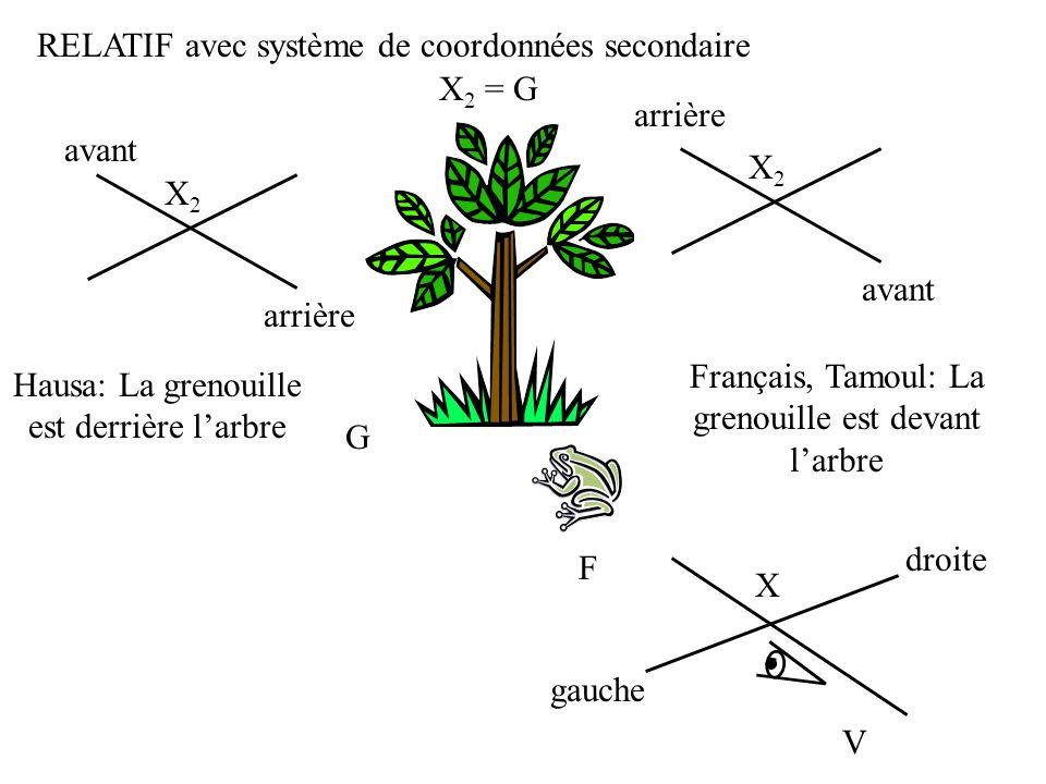 G F RELATIF avec système de coordonnées secondaire V X gauche droite X 2 = G X2X2 avant arrière Français, Tamoul: La grenouille est devant larbre X2X2