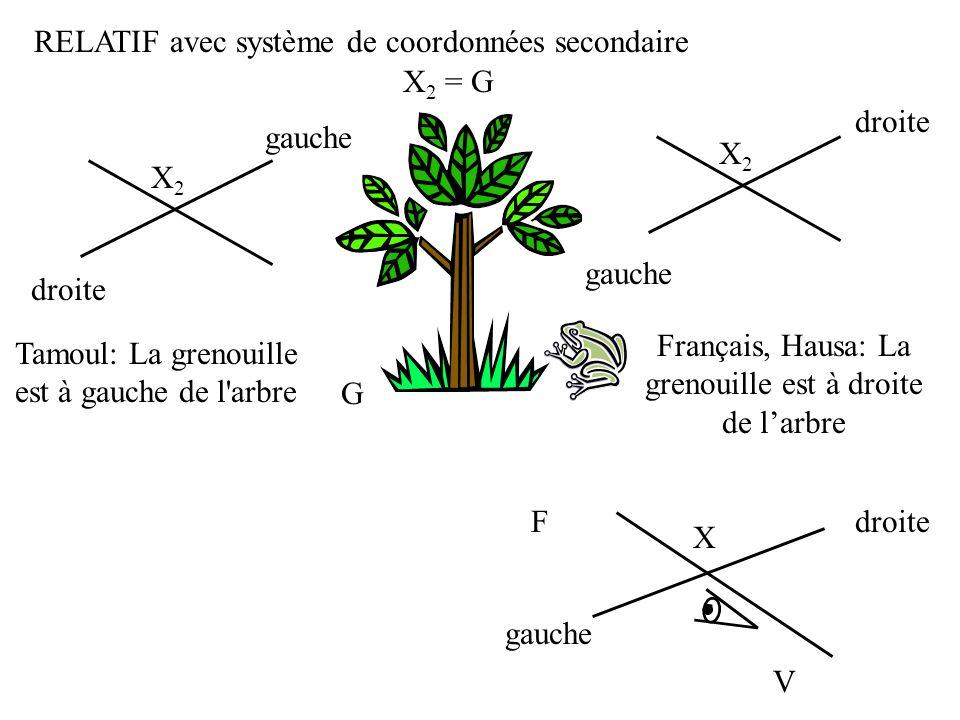 G F RELATIF avec système de coordonnées secondaire V X gauche droite X 2 = G X2X2 Français, Hausa: La grenouille est à droite de larbre X2X2 Tamoul: L