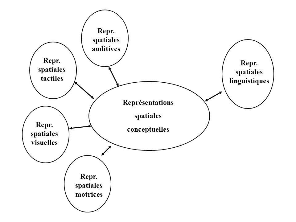 Repr. spatiales linguistiques Repr. spatiales visuelles Repr. spatiales tactiles Repr. spatiales auditives Repr. spatiales motrices Représentations sp