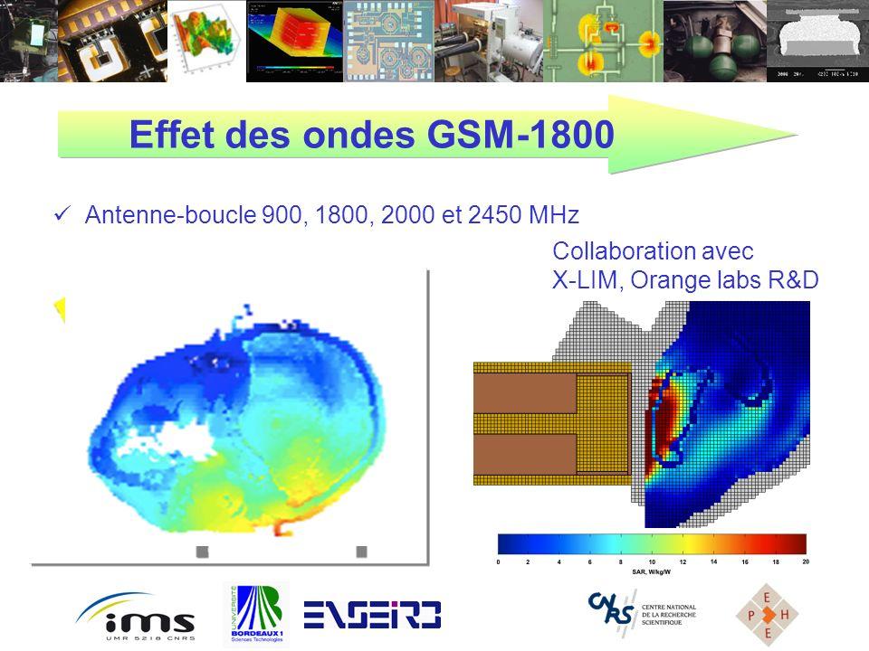 Effet des ondes GSM-1800 Antenne-boucle 900, 1800, 2000 et 2450 MHz Collaboration avec X-LIM, Orange labs R&D