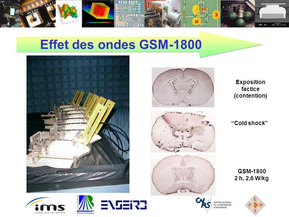 Effet des ondes GSM-1800 GSM-1800 2 h, 2,6 W/kg Exposition factice (contention) Cold shock