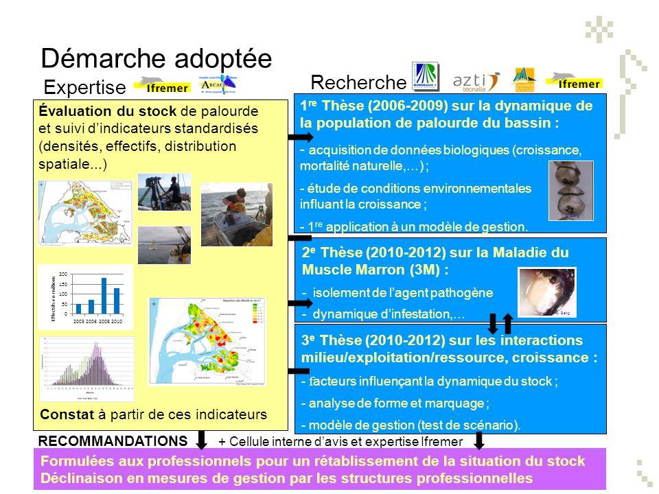 Recherche 1 re Thèse (2006-2009) sur la dynamique de la population de palourde du bassin : - acquisition de données biologiques (croissance, mortalité