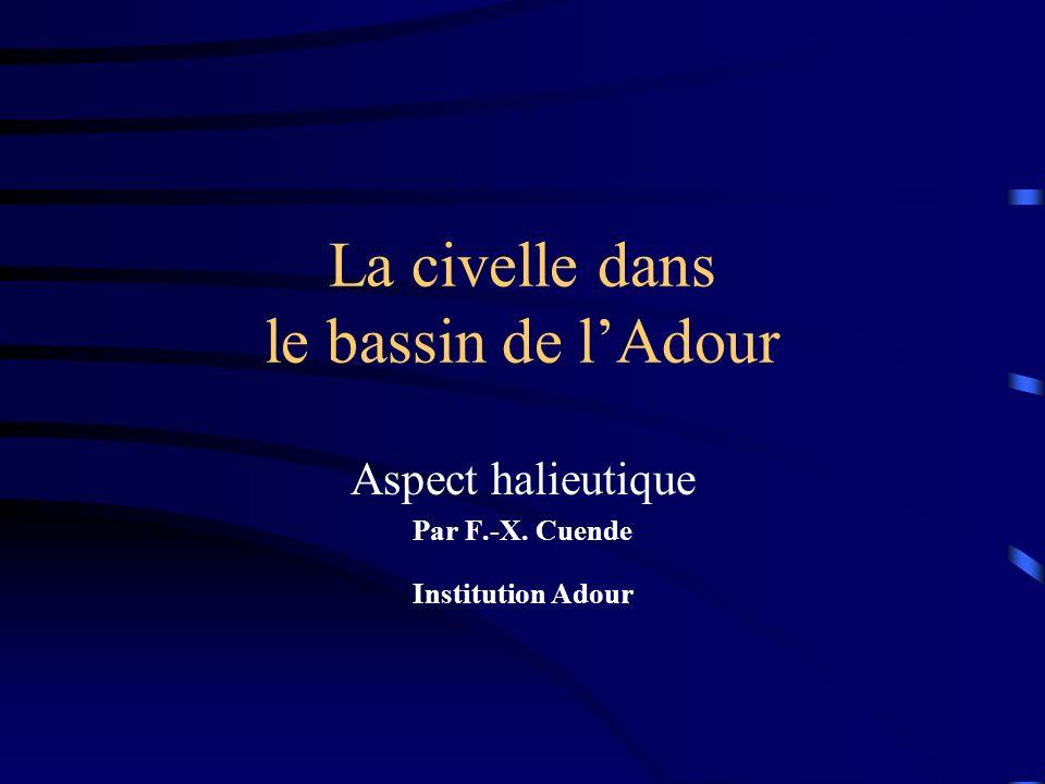 La civelle dans le bassin de lAdour Aspect halieutique Par F.-X. Cuende Institution Adour