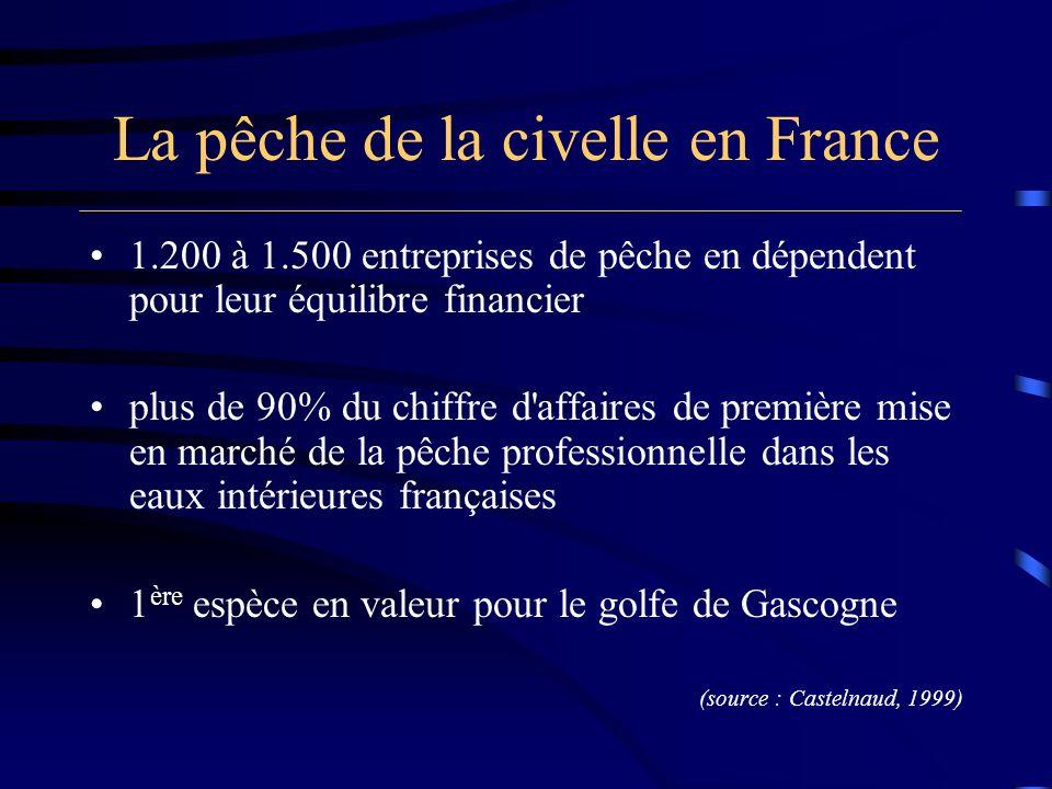 La pêche de la civelle en France 1.200 à 1.500 entreprises de pêche en dépendent pour leur équilibre financier plus de 90% du chiffre d'affaires de pr