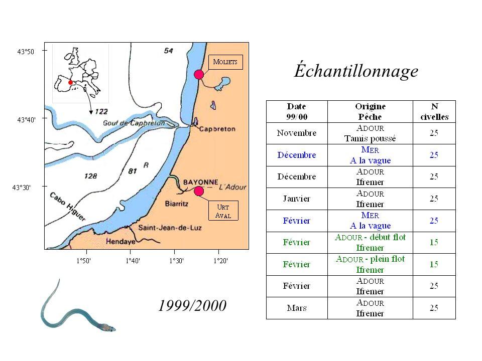 Travaux antérieurs sur l Adour Campagnes 1996/1997 - 1997/1998 - 1998/1999 saisonnière Longueur & Poids saisonnière de la pigmentation CONSTAT État ph