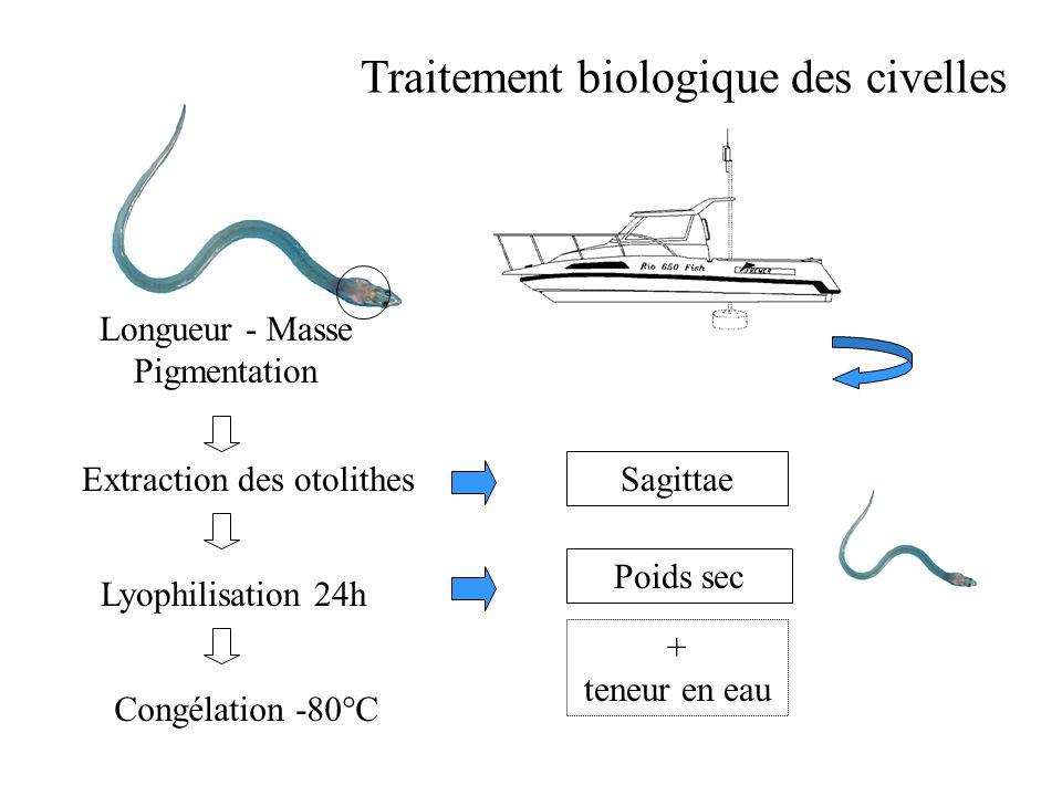 Objectifs de léchantillonnage Identifier les flux de civelles en migration Caractériser leur état physiologique au cours de la saison avant et après l