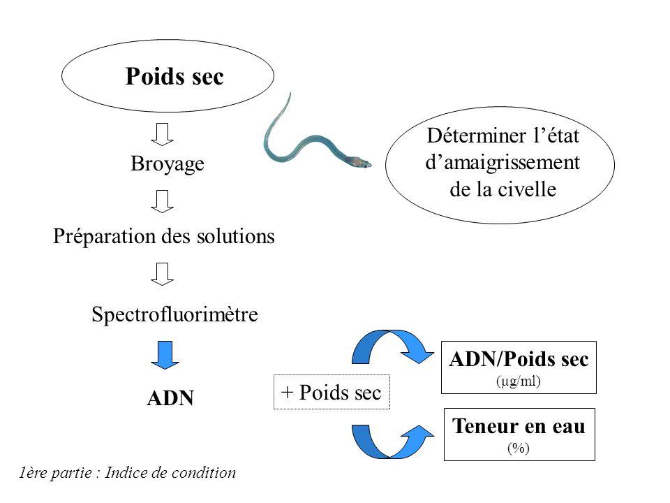 Traitement biologique des civelles Longueur - Masse Pigmentation Extraction des otolithes Lyophilisation 24h Congélation -80°C Poids sec Sagittae + te