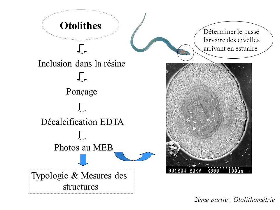 Principaux résultats obtenus (ADN/ Poids sec & % d eau) 205 civelles analysées 7 valeurs supprimées Forte variabilité au sein de chaque échantillon 1è