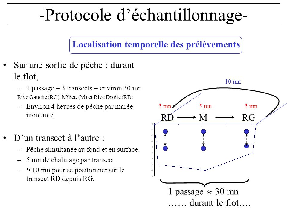 -Protocole déchantillonnage- Localisation temporelle des prélèvements Sur une sortie de pêche : durant le flot, –1 passage = 3 transects = environ 30