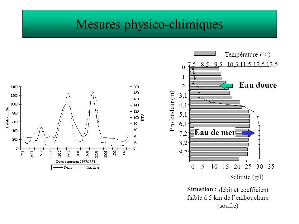 Visualisation du développement de la pigmentation Stade 5B présenté Dénombrement des civelles dans le trait de tamis