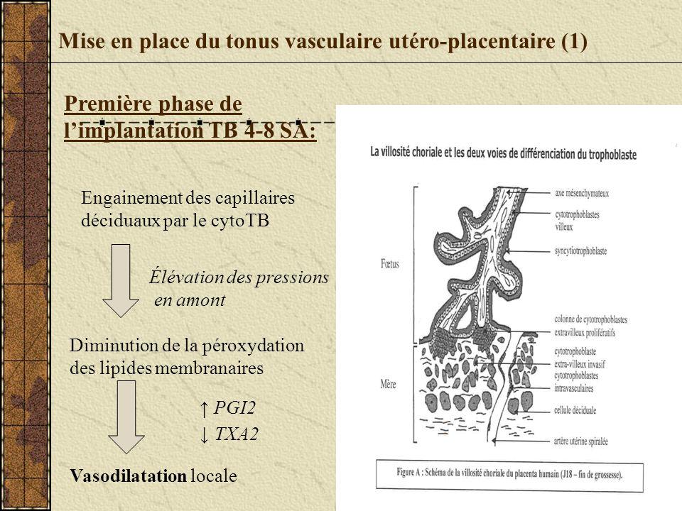 Mise en place du tonus vasculaire utéro-placentaire (1) Engainement des capillaires déciduaux par le cytoTB Élévation des pressions en amont Diminutio