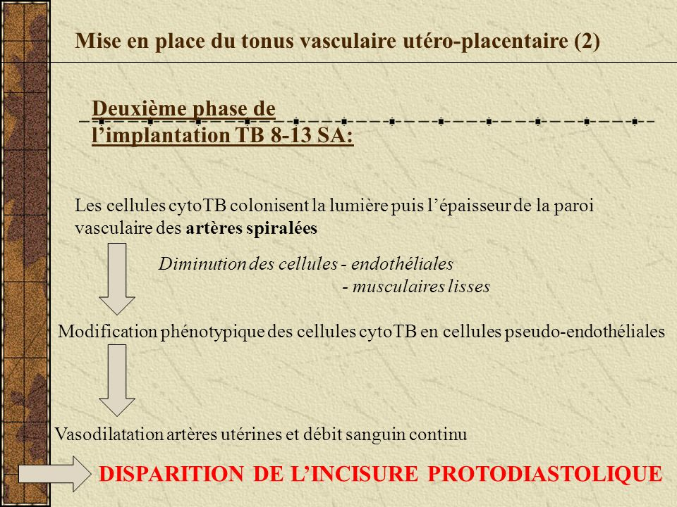 Mise en place du tonus vasculaire utéro-placentaire (2) Deuxième phase de limplantation TB 8-13 SA: Les cellules cytoTB colonisent la lumière puis lép