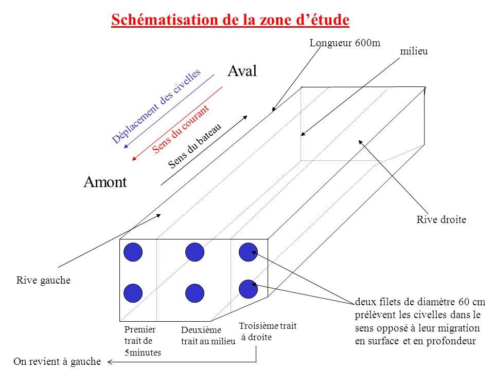 Aval Amont Déplacement des civelles Schématisation de la zone détude Sens du courant Rive droite Rive gauche milieu deux filets de diamètre 60 cm prél